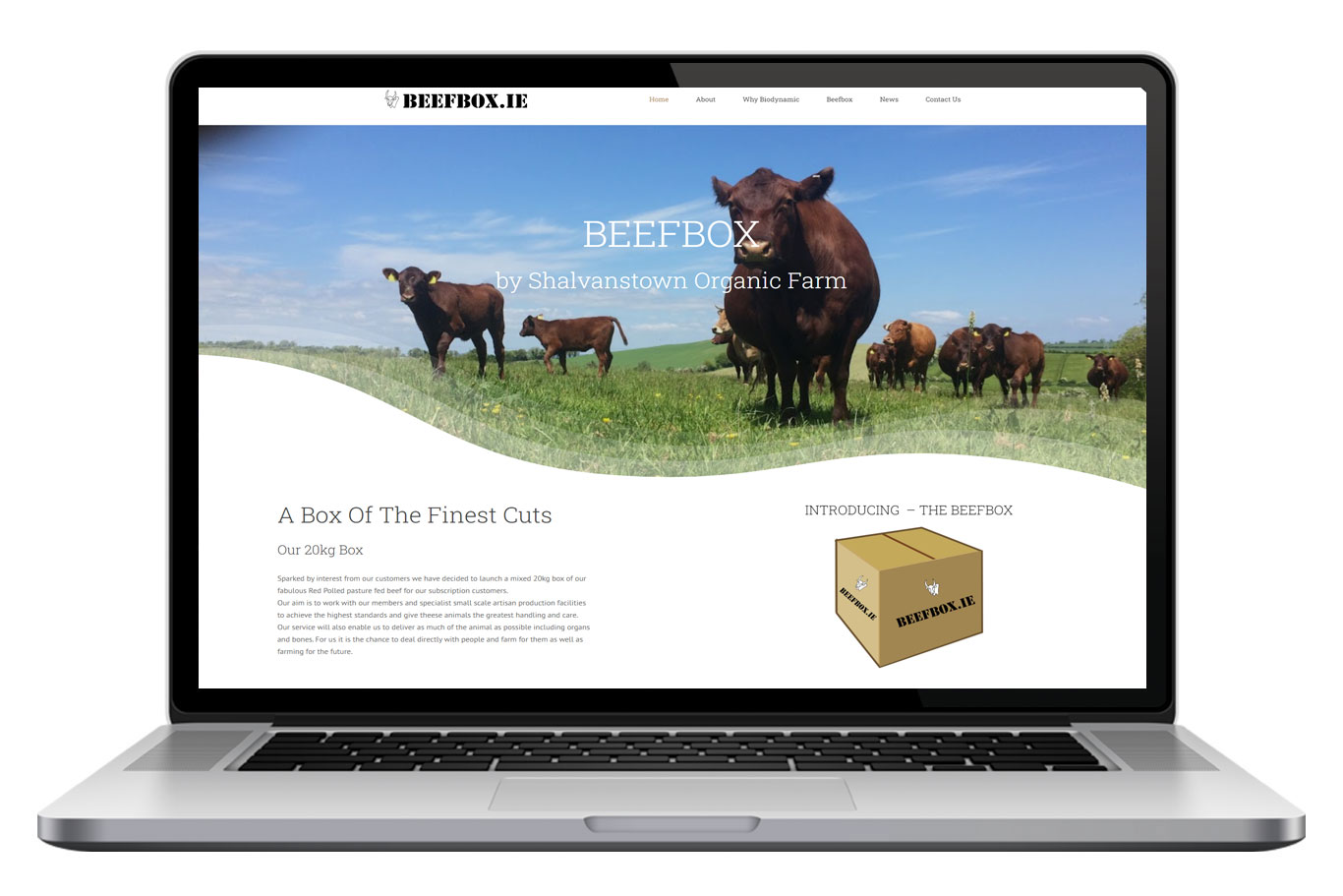 Beefbox Website